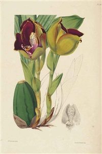 a second century of orchidaceous plants (bk by james bateman w/100 works) by walter hood fitch