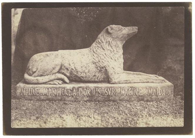 sir walter scott's favorite dog, maida (from sun pictures in scotland) by william henry fox talbot