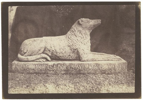 sir walter scotts favorite dog maida from sun pictures in scotland by william henry fox talbot
