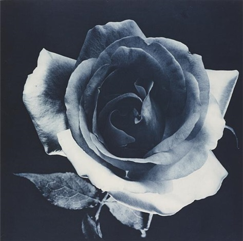blue rose by robert mapplethorpe
