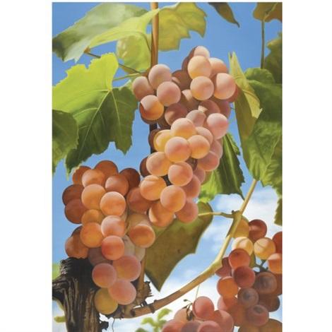 grapes i by mustafa hulusi
