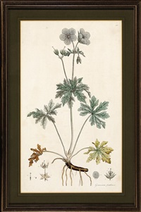 yellow iris, crowfoot cranesbill, rosebay willow-herb, marsh-marigold, smooth-round-headed poppy and large white convolvulus or great bindweed (6 works) by william curtis