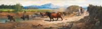 troupeau de taureaux by fred. amerigo
