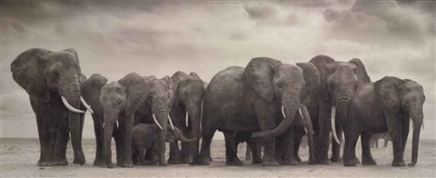 elephant group on bare earth amboseli by nick brandt