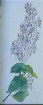 syringa vulgaris by rodolphe koechlin