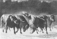 manada de toros en estampida by valentín sanz carta