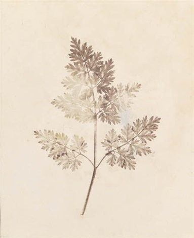 pencil of nature various sizes 13 works by william henry fox talbot