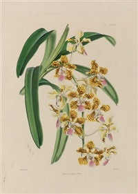 study of orchids (+ 5 others; 6 works) by walter hood fitch