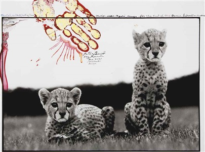 cheetah cubs at feeding time, mweiga near nyeri, kenya, for the end of the game by peter beard