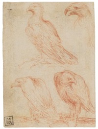 studies of an eagle (4 works) by parmigianino