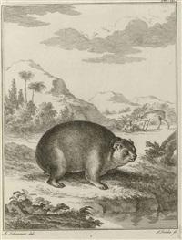 miscellanea zoologica quibus novae imprimis atque obscurae animalium species describuntur (bk w/14 works, 4to) by peter simon pallas