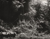 bulldozed slash, tillamook county, oregon (from 'from the missouri west) by robert adams