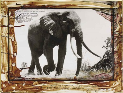 large tusker, circa 110-115 pounder, near kattremula on the tiva sand river, tsavo north, february by peter beard