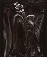 jungle orchid, paris by elisabeth sunday