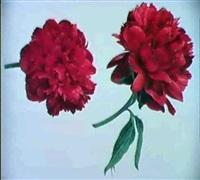 pivoine et tulipe by rodolphe koechlin