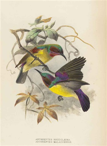 a monograph of the nectariniidae or family of sun-birds (bk by george ernest shelley w/121 works) by johannes gerardus keulemans