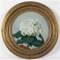 l'hortensia blanc by etienne drian