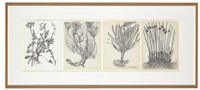 untitled quartet (all pages: plants and roots) (4 works) by merce cunningham