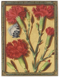 clove pinks and a small tortoiseshell butterfly by jacques le moyne (de morgues)