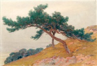 les pins sur la colline by louis hestaux