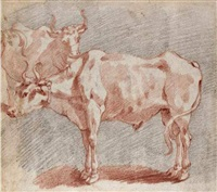 a bullock in profile to the left, another beyond by andrea boscoli