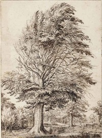 a large beech, partly in leaf by jacques de gheyn ii