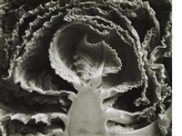 kale halved by edward weston