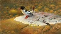 two ducks by thure wallner