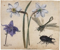 flowers and insects: two narcissi and a columbine, with a dragonfly and a stag beetle (study) by jacques le moyne (de morgues)
