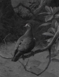 an emerald dove by david morrison reid henry