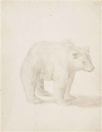 study of a bear cub by jacques de gheyn ii