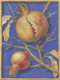 a pomegranate (punica granatum) by jacques le moyne (de morgues)