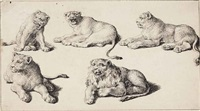 five studies of lion cubs by jacques de gheyn ii