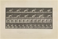 animal locomotion, plate 471 by eadweard muybridge