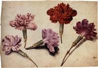 five clove pinks (study) by jacques le moyne (de morgues)