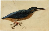 a kingfisher on a branch by jacques le moyne (de morgues)