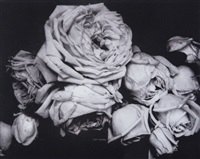 heavy roses, voulangis, france by edward steichen