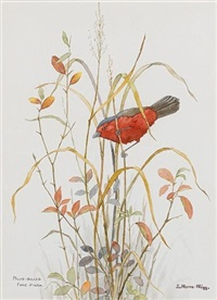 blue-billed fire-finch (+ 5 others; 6 works) by j. home-rigg