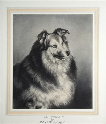 ch eclipse a sable and white rough collie by frank paton