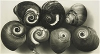 seven shells, new york, may 2 by irving penn