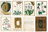 a highly important manuscript florilegium (album of botanical works w/81 leaves & frontispiece, first dbl-sided w/cartouche & text, 4to) by jacques le moyne (de morgues)