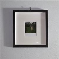 polaroid 06 by nobuyoshi araki