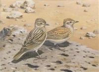 desert larks by david morrison reid henry