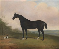 horse portrait by g. b. newmarch