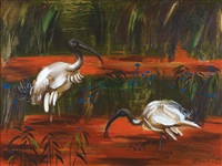 ibis feeding by albert lee tucker
