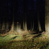 forêts n°1 by juliette agnel