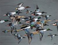 vol de canards souchet by patrice bac