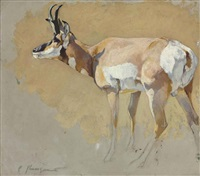 study of an antelope by carl clemens moritz rungius