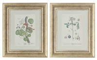 untitled (+ 9 others; 10 works from a curious herbal series) by elizabeth blackwell