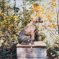 locked box by william wegman